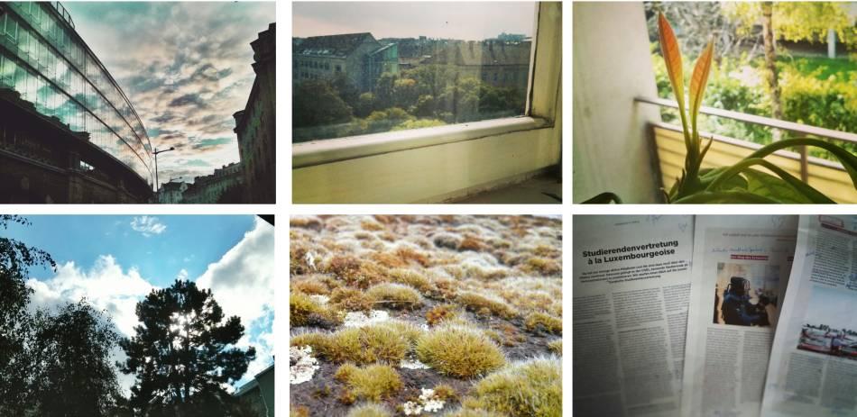 Fotos aus dem Jahr 2014: Der Himmel ueber Wien, Blick aus dem Buero-Fenster, Blätter am Avocadobaum, Himmel, Moos, progress-Fahnen