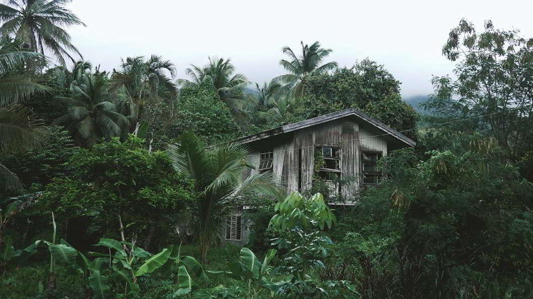 Ein Haus im Dschungel.