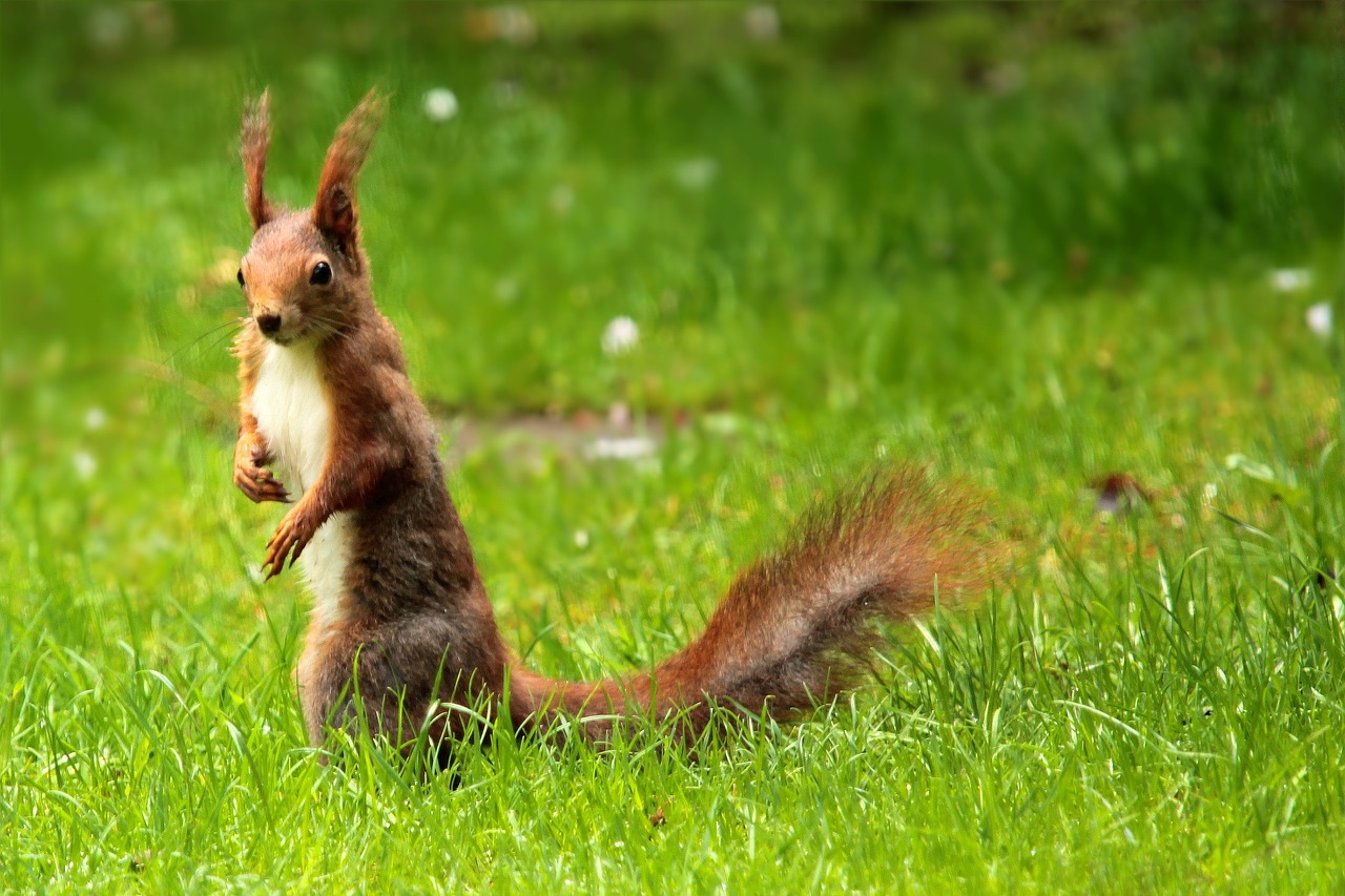 squirrel photo
