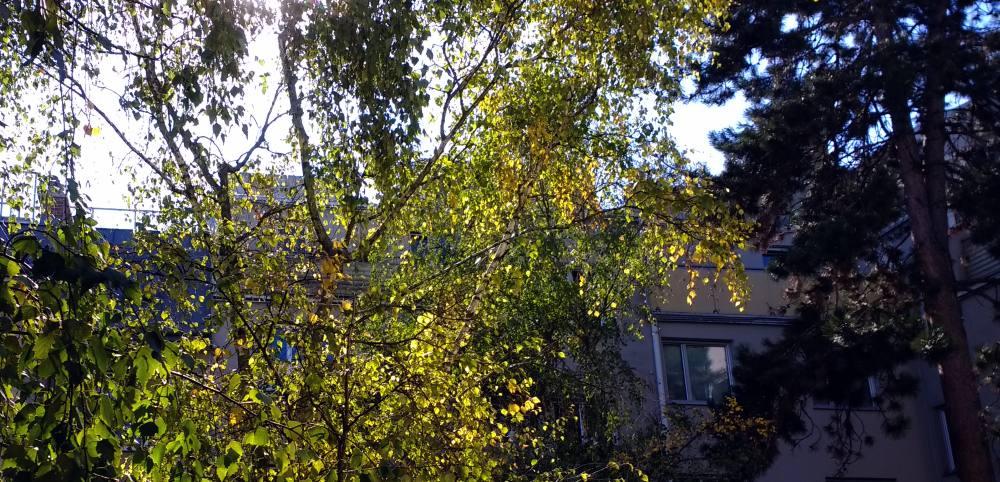 Innenhof mit einer Birke und einer Lärche, im Hintergrund ein graues Haus, darüber der strahlende Himmel, weiß und blau.