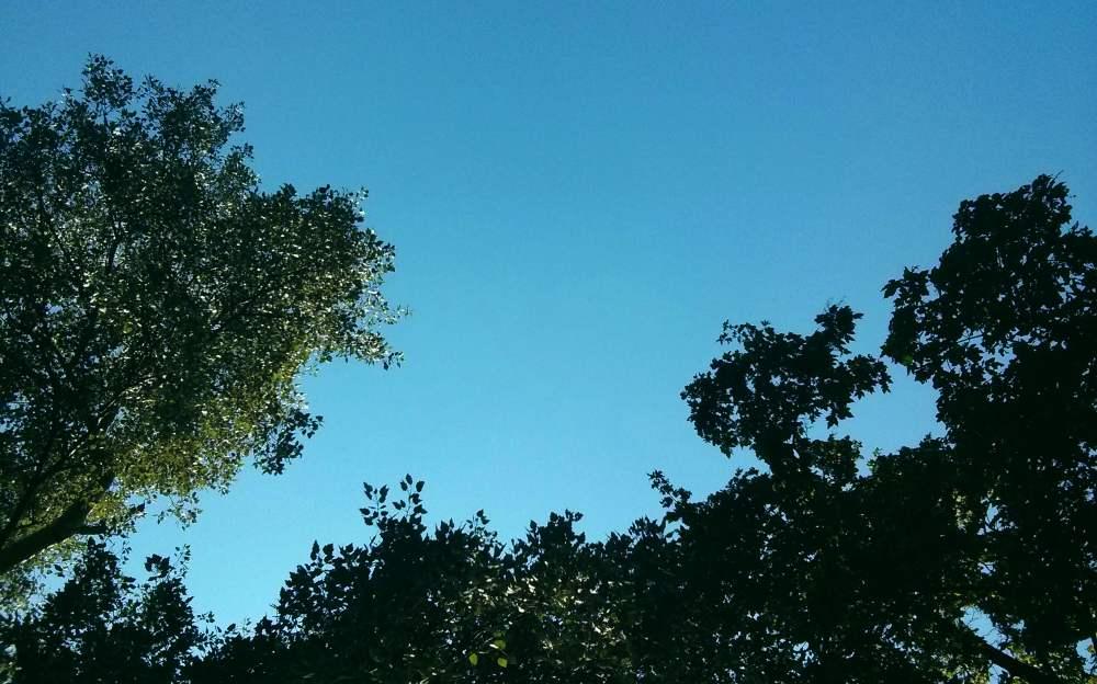 Strahlend blauer Himmel, von unten fotografiert, so dass einige Baumkronen voller grüner Blätter sichtbar sind.