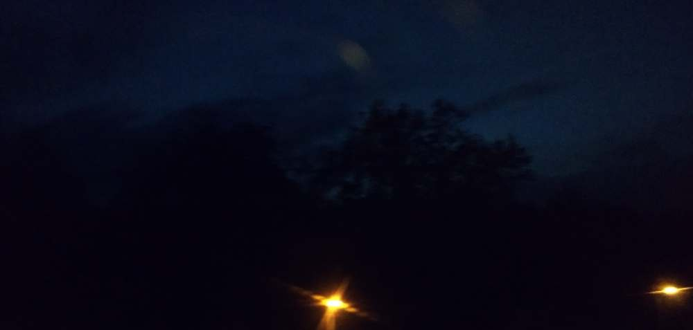 Bäume in der Nacht