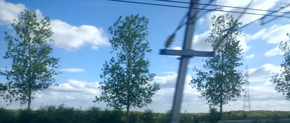 Bäume, Stromleitungen, im Hintergrund Wolken, viel Himmel und ein Strommast.