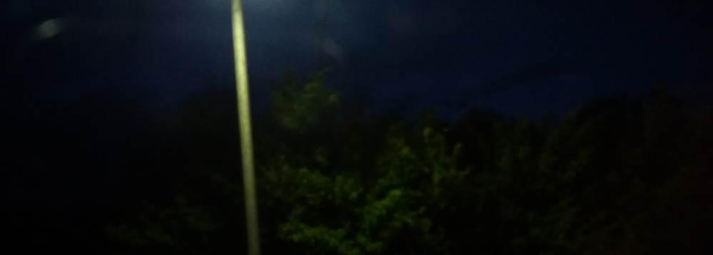 Sträucher in der DUnkelheit, nur eine Laterne einer Haltestelle beleuchtet sie.