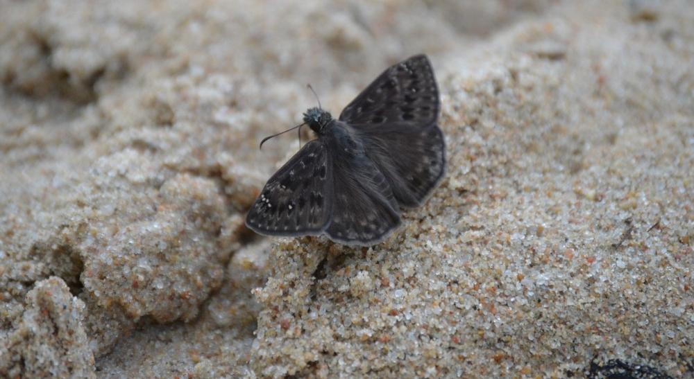 Eine schwarze Motte