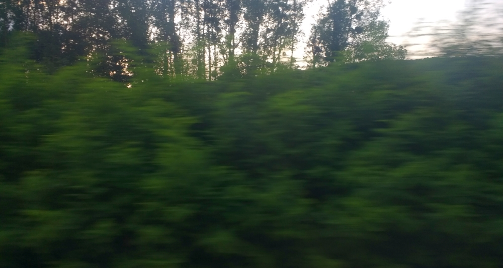 Foto aus dem Zug aufgenommen, verschwommenes grünes Gebüsch, dahinter ein paar einzelne Bäume.